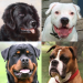 Dogs Quiz – Guess Popular Dog Breeds in the Photos APK