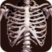 Osseous System in 3D (Anatomy) APK