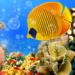 Aquarium Live Wallpaper 🐟 Fish Tank Background APK