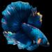 Betta Fish Live Wallpaper FREE APK